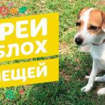 Что следует знать о спреях от блох для домашних животных