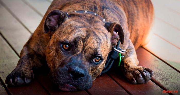 Всё о дисбактериозе у собаки: симптомы и лечение